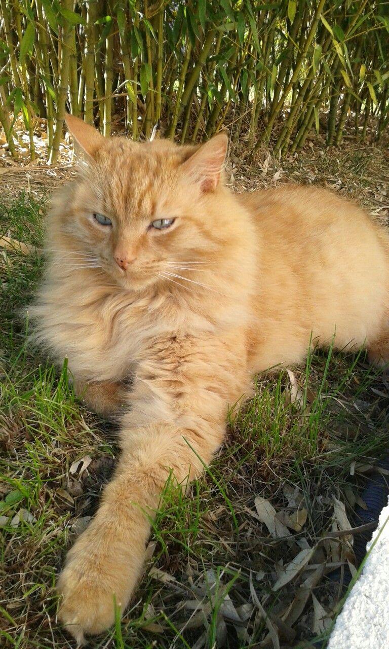 Een Mooie Rode Kat Orange Tabby Cats Tabby Cat Tabby Cat