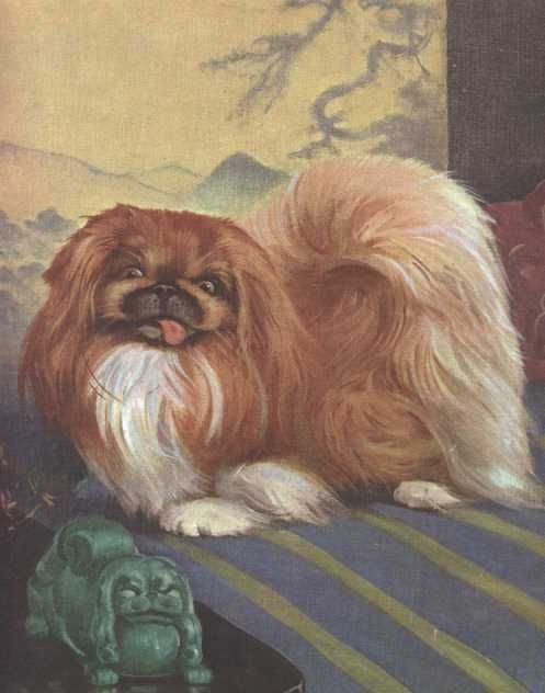 """The Pekingese by Wesley Dennis. """"This artist saw beyond hide and hair and bone. You could see that he understood and loved animals, that he was trying to capture theirspirit, personality and expression."""