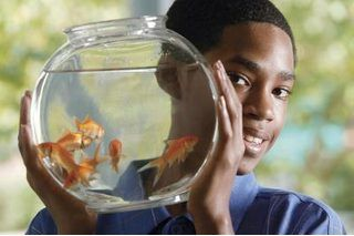 How long your freshwater fish can live without a filter depends on the species of fish and your aquarium conditions. Certain types of fish can spend their whole lifespans -- in some cases, a decade or more -- filterless; others won't make it through a single day. In addition, cleanliness, gravel and live plants determine whether some species can...