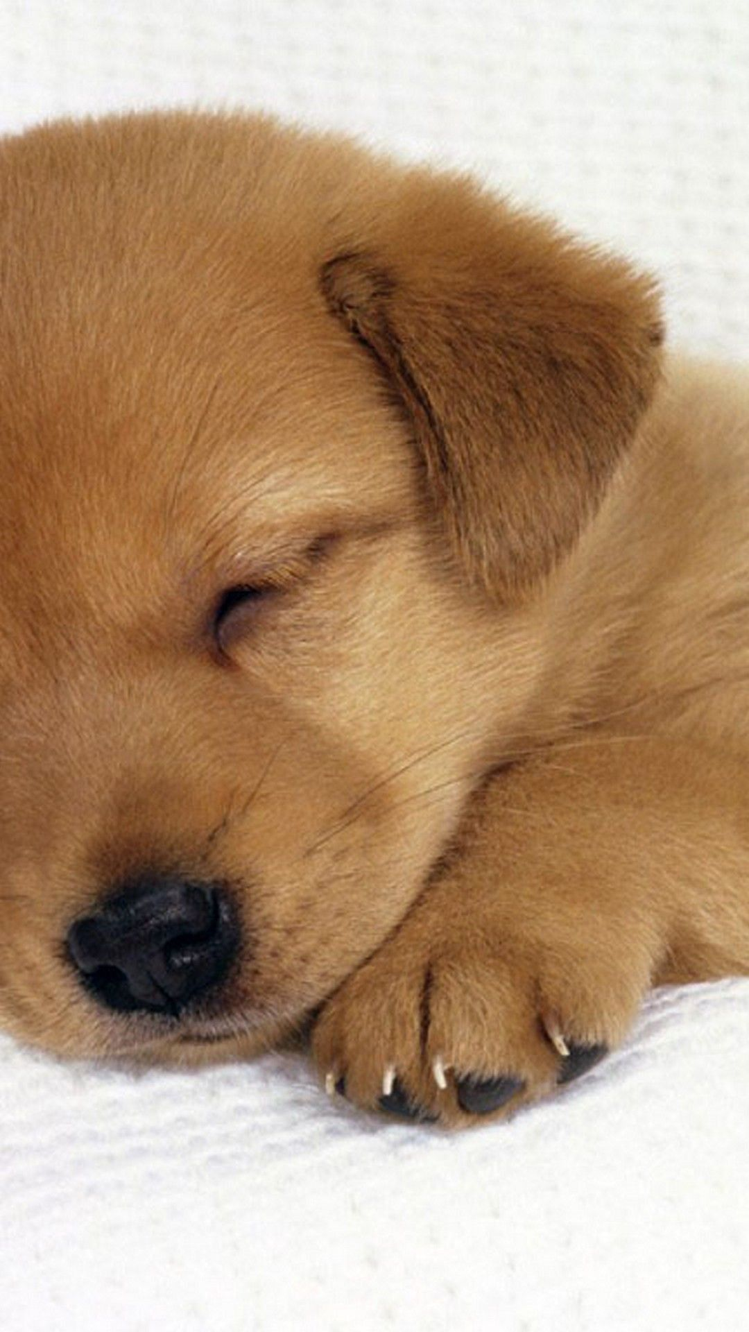 Baby Dog Wallpaper Ios Puppy Backgrounds Puppy Wallpaper Iphone Cute Puppies