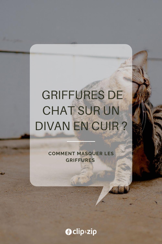 Cacher Les Griffures De Mon Chat Sur Mon Divan En Cuir In 2020