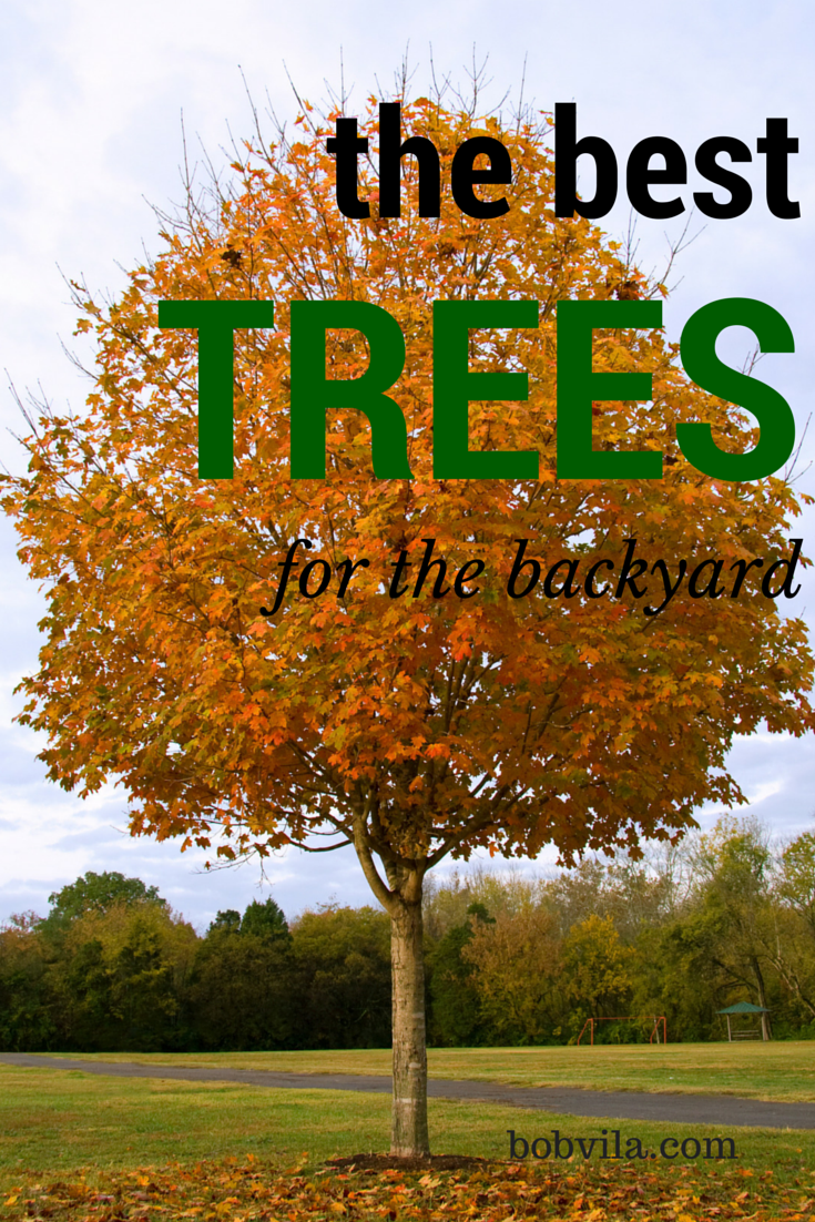 10 Of The Best Trees For Any Backyard Backyard Trees Diy