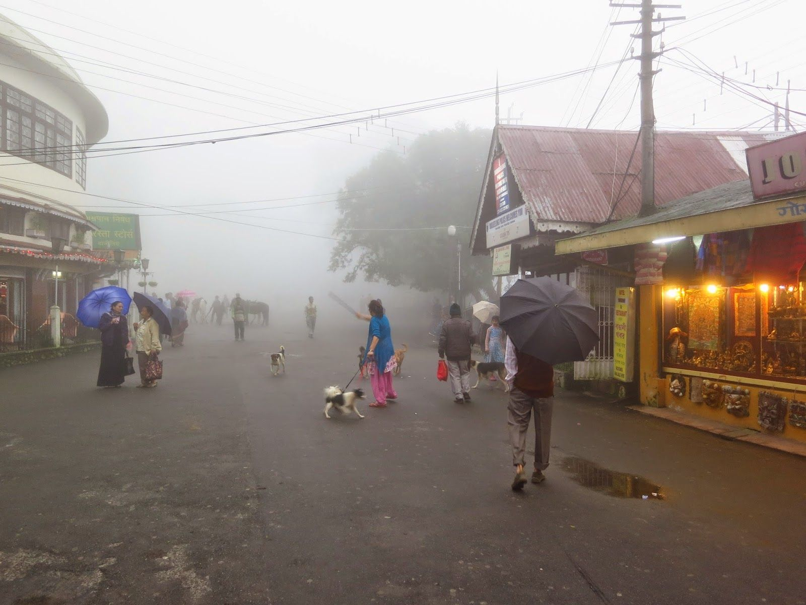 An foggy evening in Darjeeling. | Romantic places, Views, Foggy