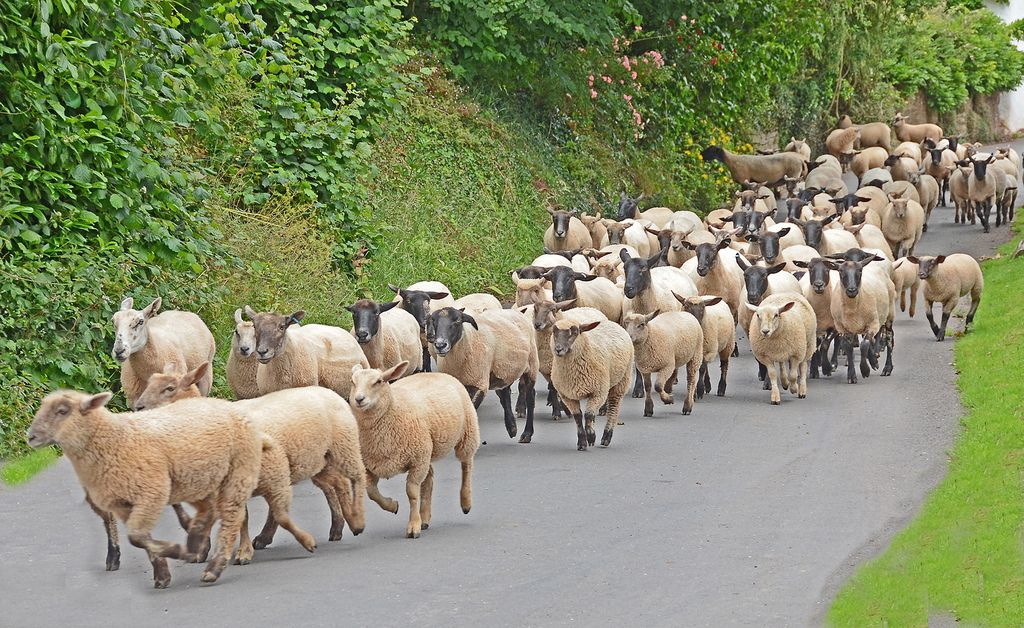 Flock on the way to pastures new. | Flickr - Photo Sharing!