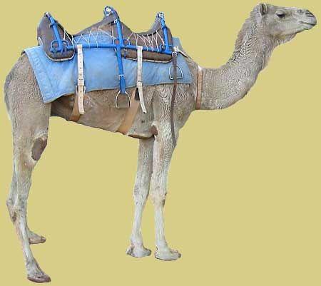 Pin On Saddles