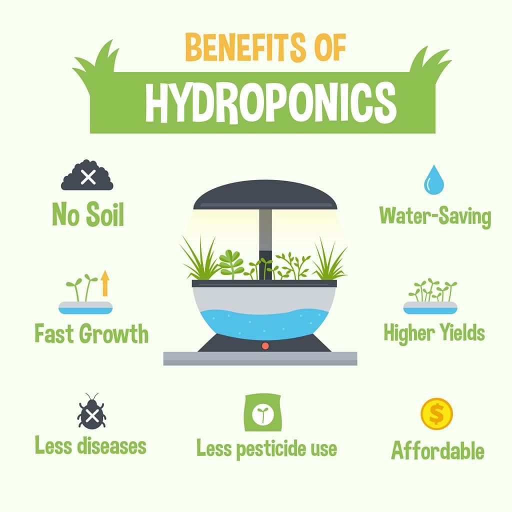 No soil, no problem! Benefits of hydroponic gardening ...