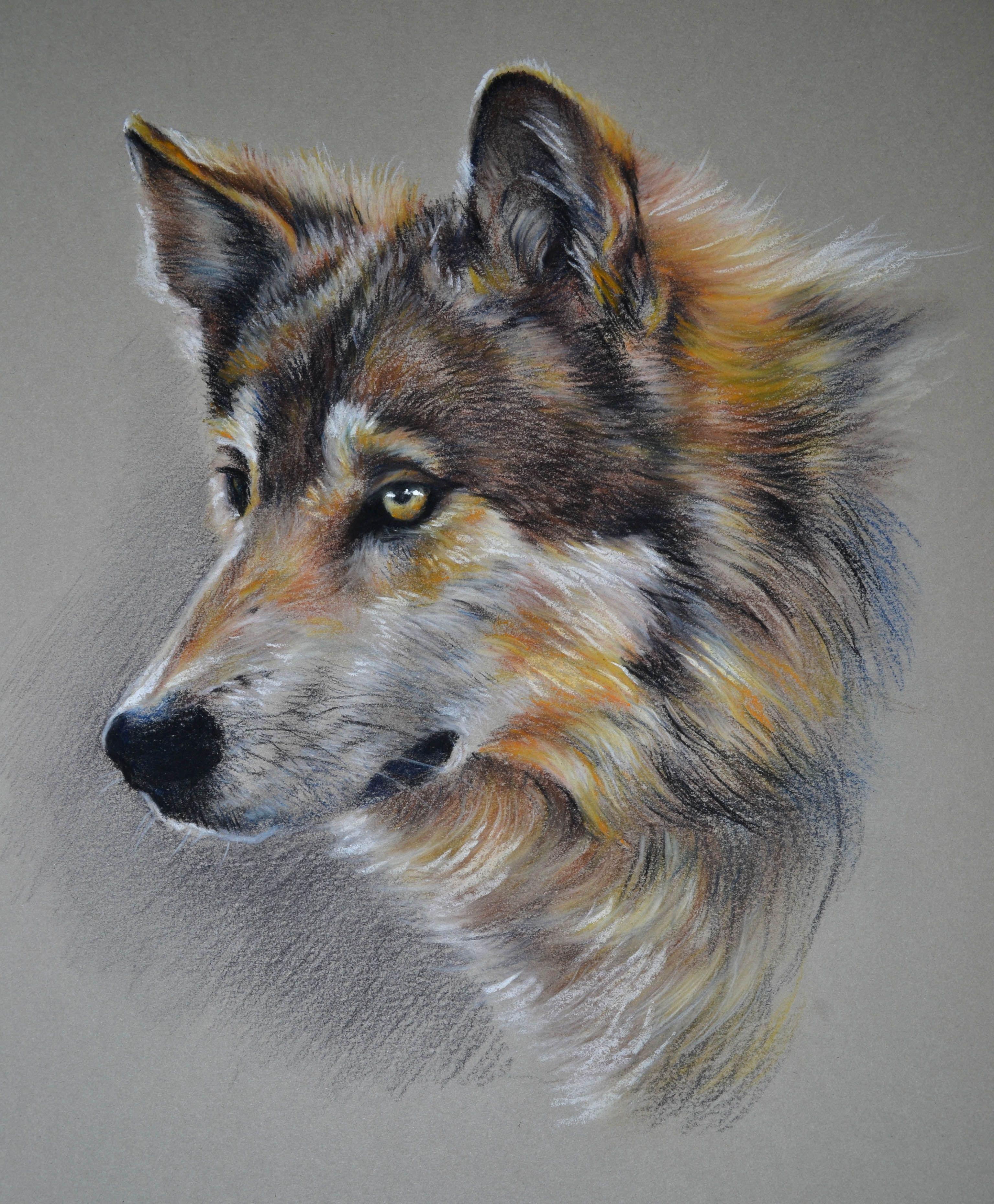 Картинки волка пастелью
