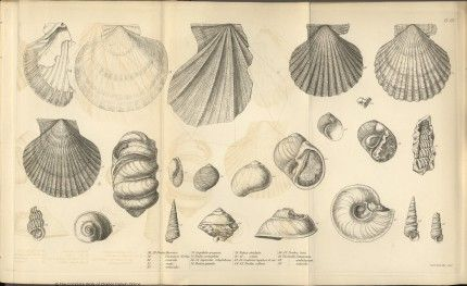 Darwin Online Illustrations In Geology Of The Voyage Of The