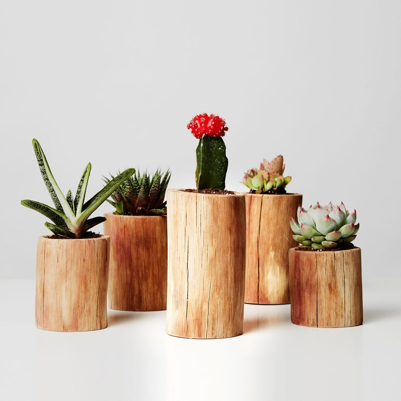 Set Of 5 Cactus Plant Pots For Succulents And Peperomia Rustic Plant Decor Plant Farmhouse Decor Peperomia Pot Ivy Plant Stand With Images Cactus Plant Pots Plant Decor Large Plant Pots