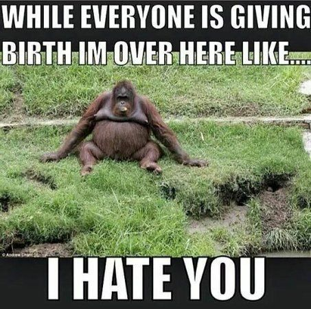 929ee985f4c1cdb8f94bc4e3fe326846 while everyone is giving birth i'm over here like i hate you,Giving Birth Memes