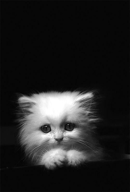 Cat Care Cute Cats Kittens Cutest Cute Animals