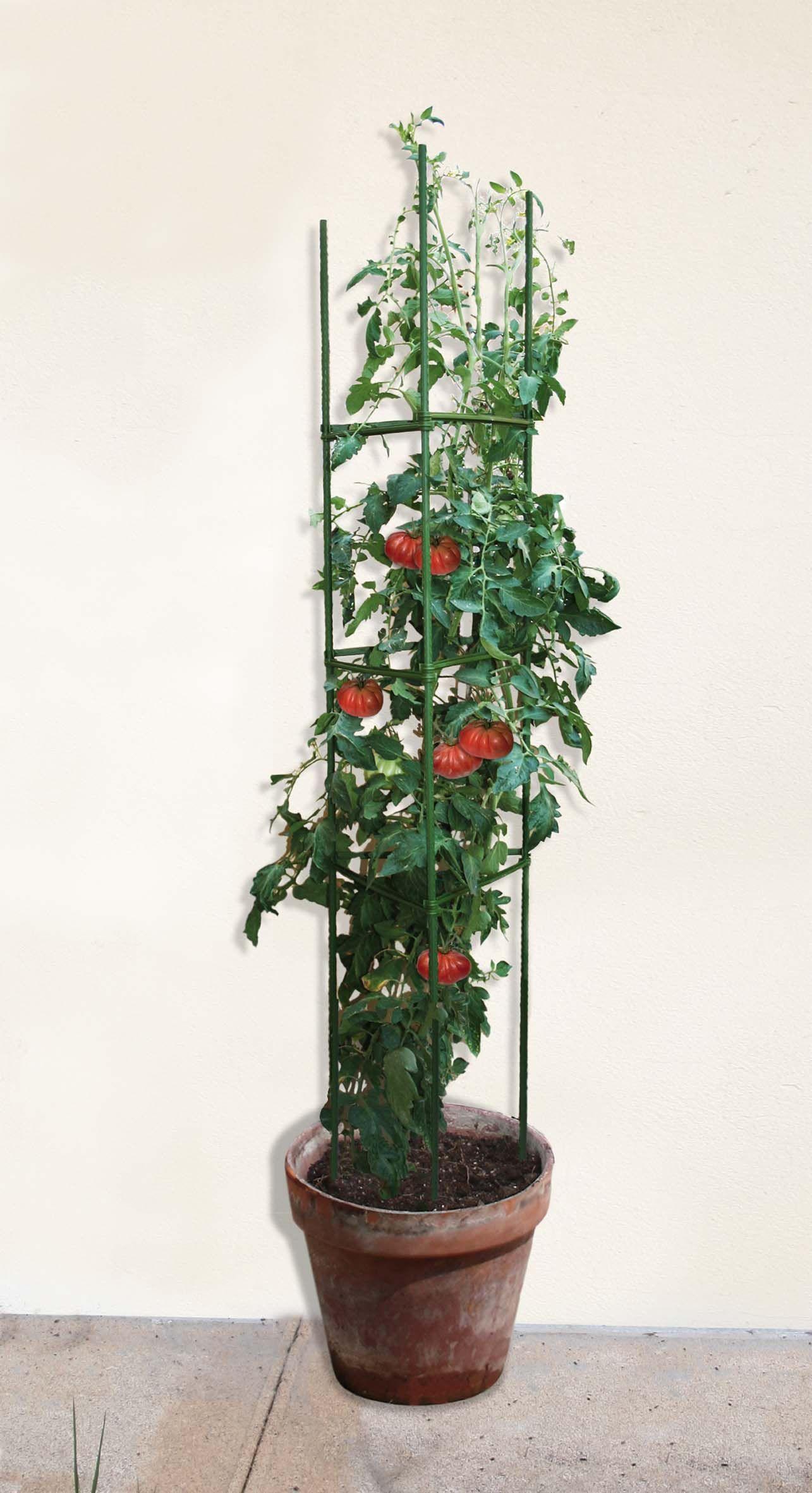 Sostegni Per Pomodori In Vaso formato da 3 tutori in acciaio, ideale per piante rampicanti