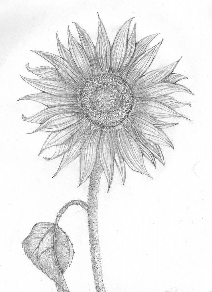 Sunflower pencil sketch baby girls art workshop at st elmos village inspired me to break out the drawing pad and get to work