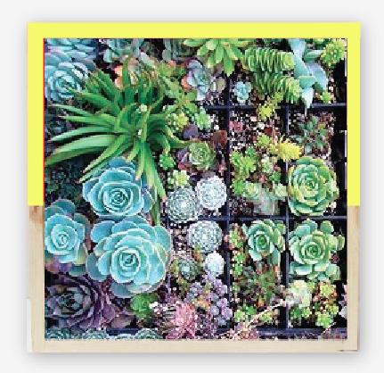 SHELTERBLACK_Wall mountable planter frame