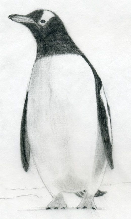 Painted Penguin Jobs