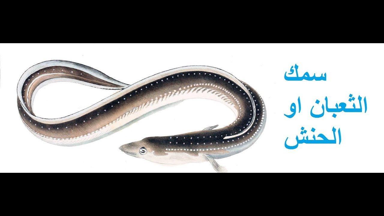 دراسه جدوي المشروعات الصغيره مشروع تربيه الحنشان ثعابين السمك Business