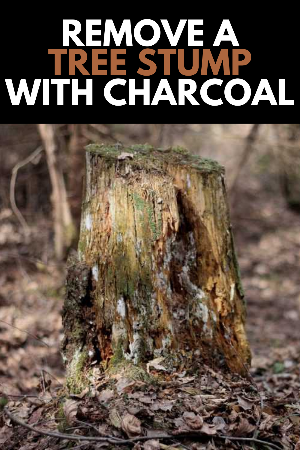 How To Remove A Tree Stump With Charcoal Comprehensive Guide 2021 Tree Stump Tree Stump Removal