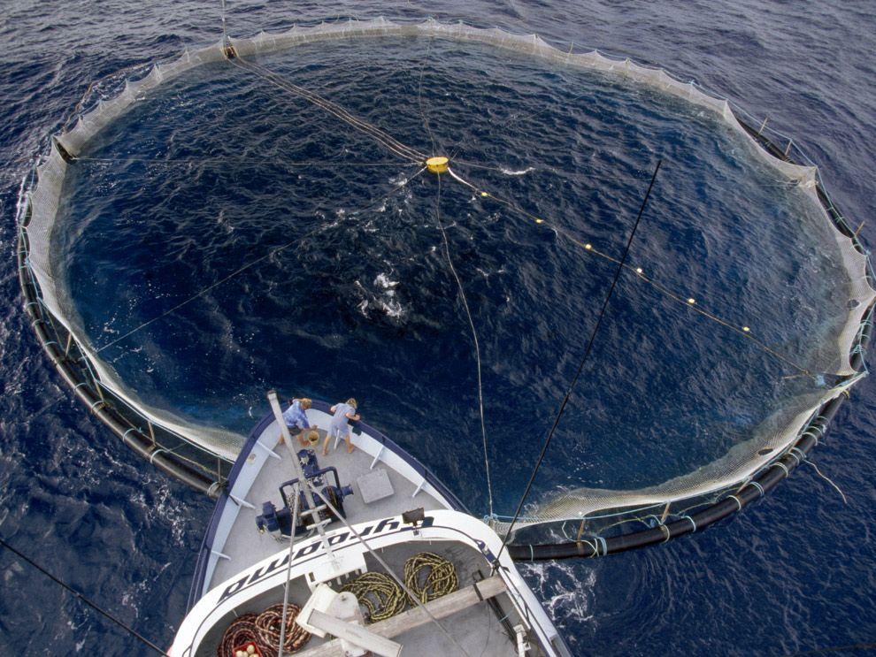 Overfishing Tuna Net Southern Ocean Global Warming Southern Ocean Bottom Of The Ocean