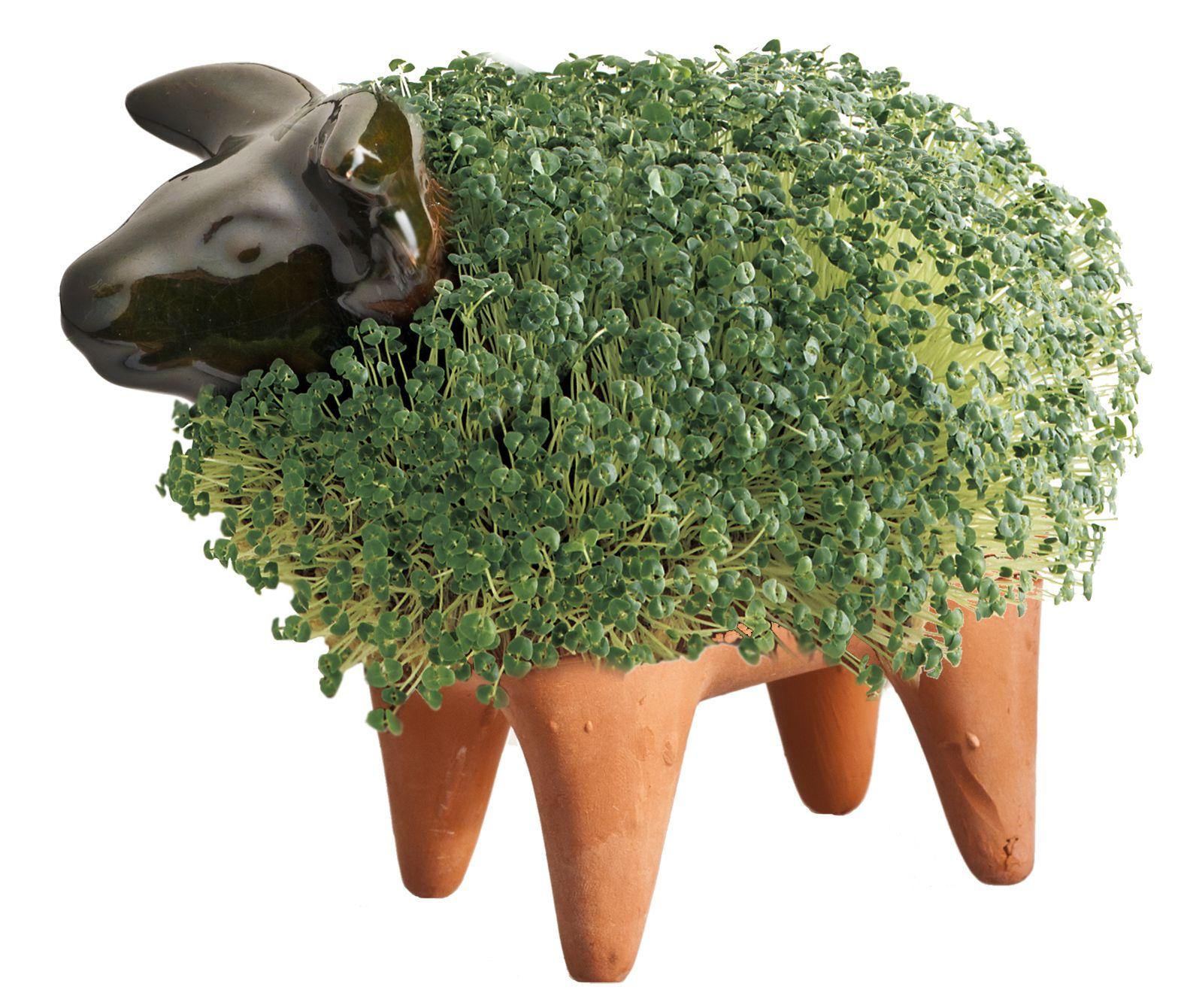 Chia Bull | Chia pet, Garden gifts, Pets