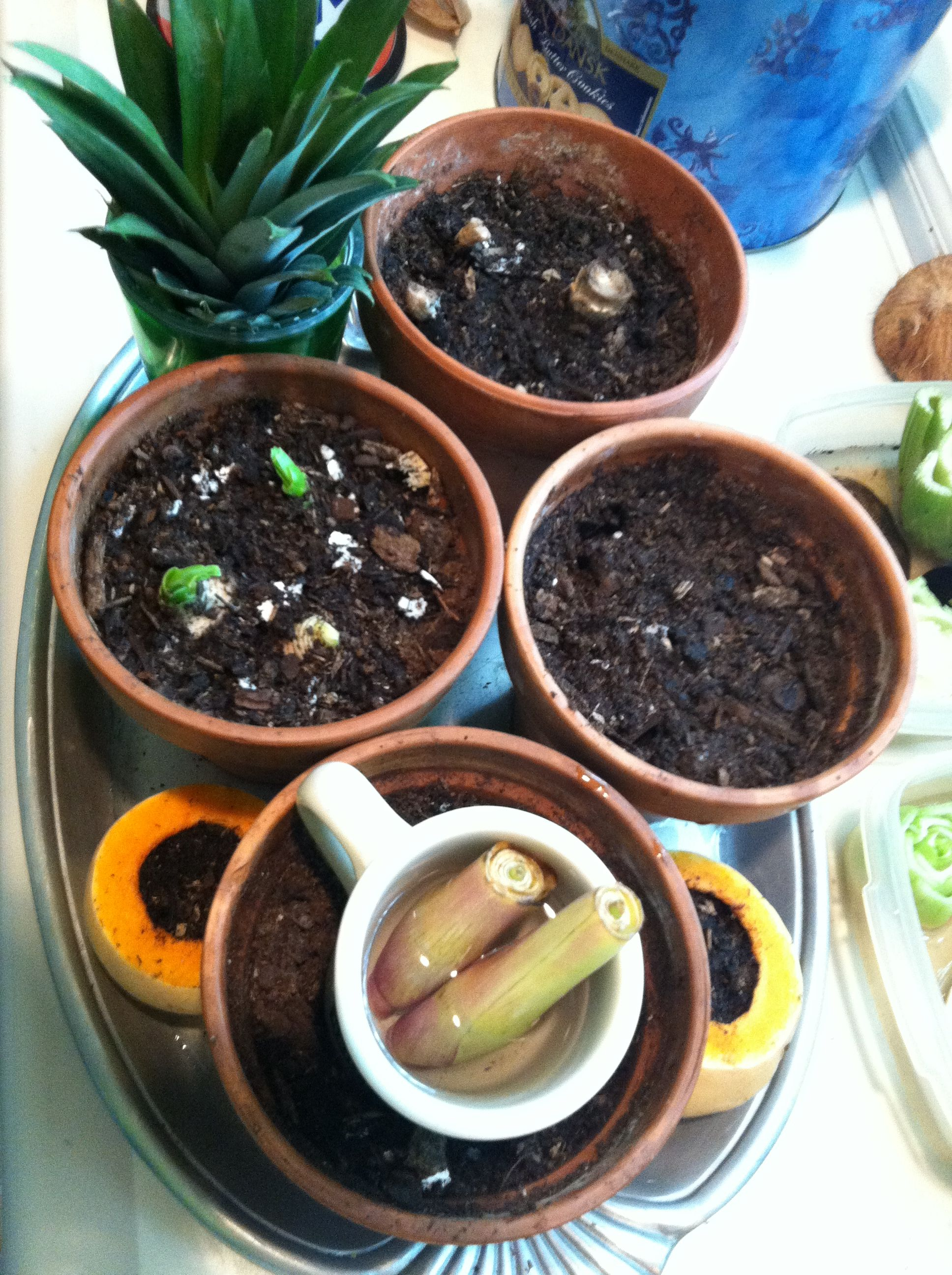 Indoor Sustainable Vegetable Gardens Are So Easy To Start 400 x 300