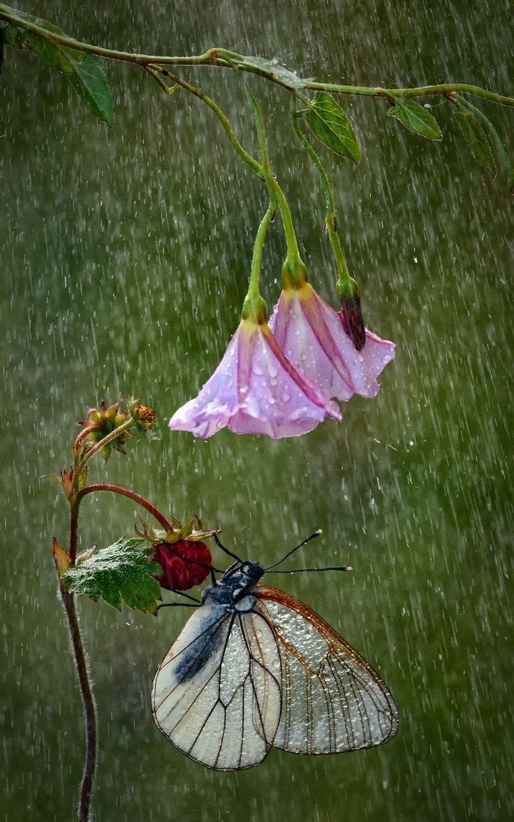 bellasecretgarden:Sing in the Rain