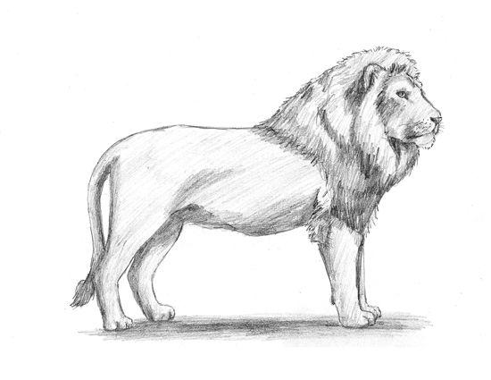 Animals cartoon drawing lion - photo#55