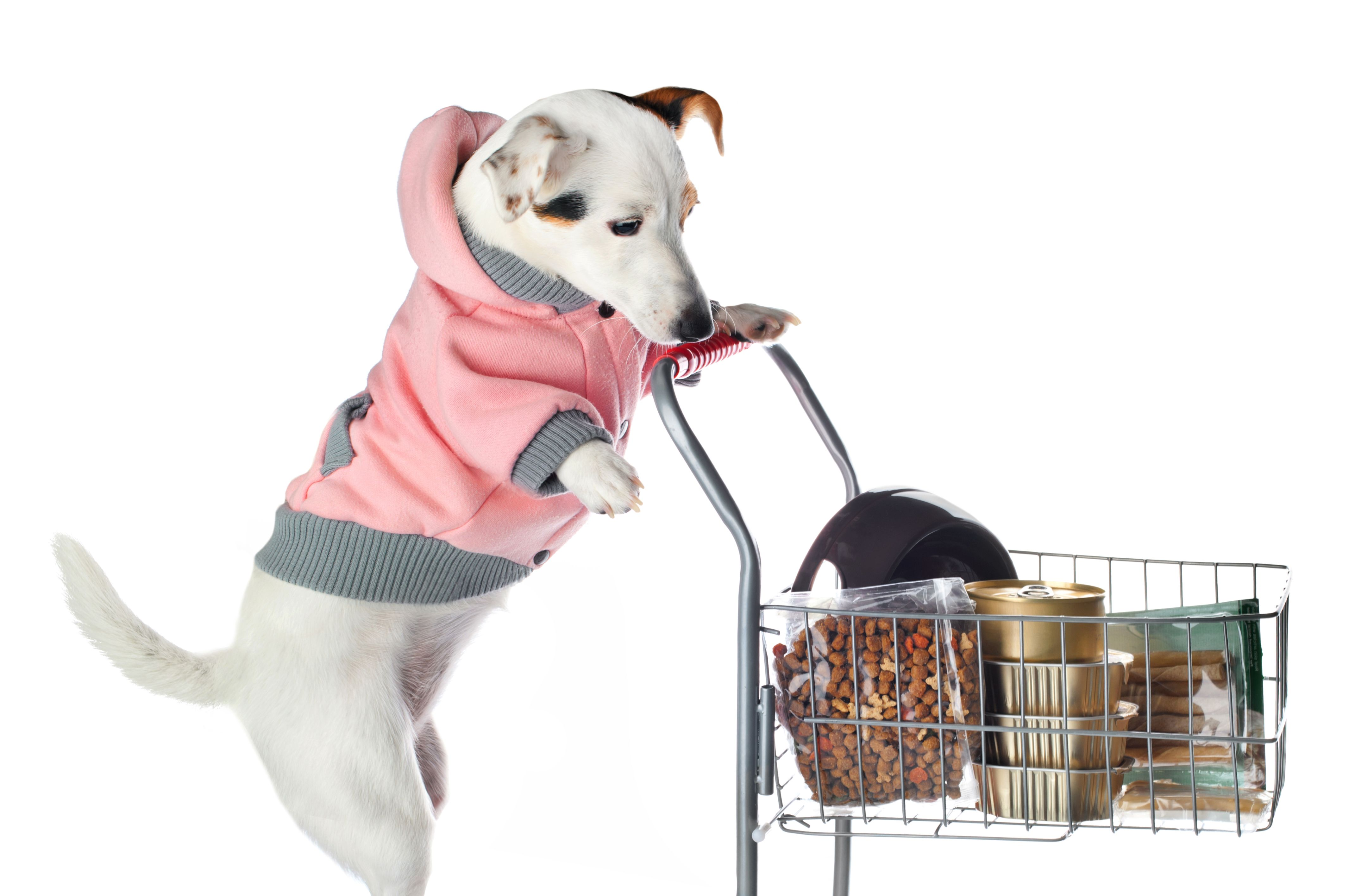 Animals who loves grocery shopping. Dog supplies, Cheap dogs