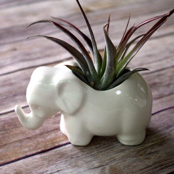 elephant planter air plant holder ceramic elephant perfect for air plant or little succulent. Black Bedroom Furniture Sets. Home Design Ideas