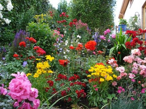 Awesome Rose Garden | Beautiful Mixed Flower Bed With Roses
