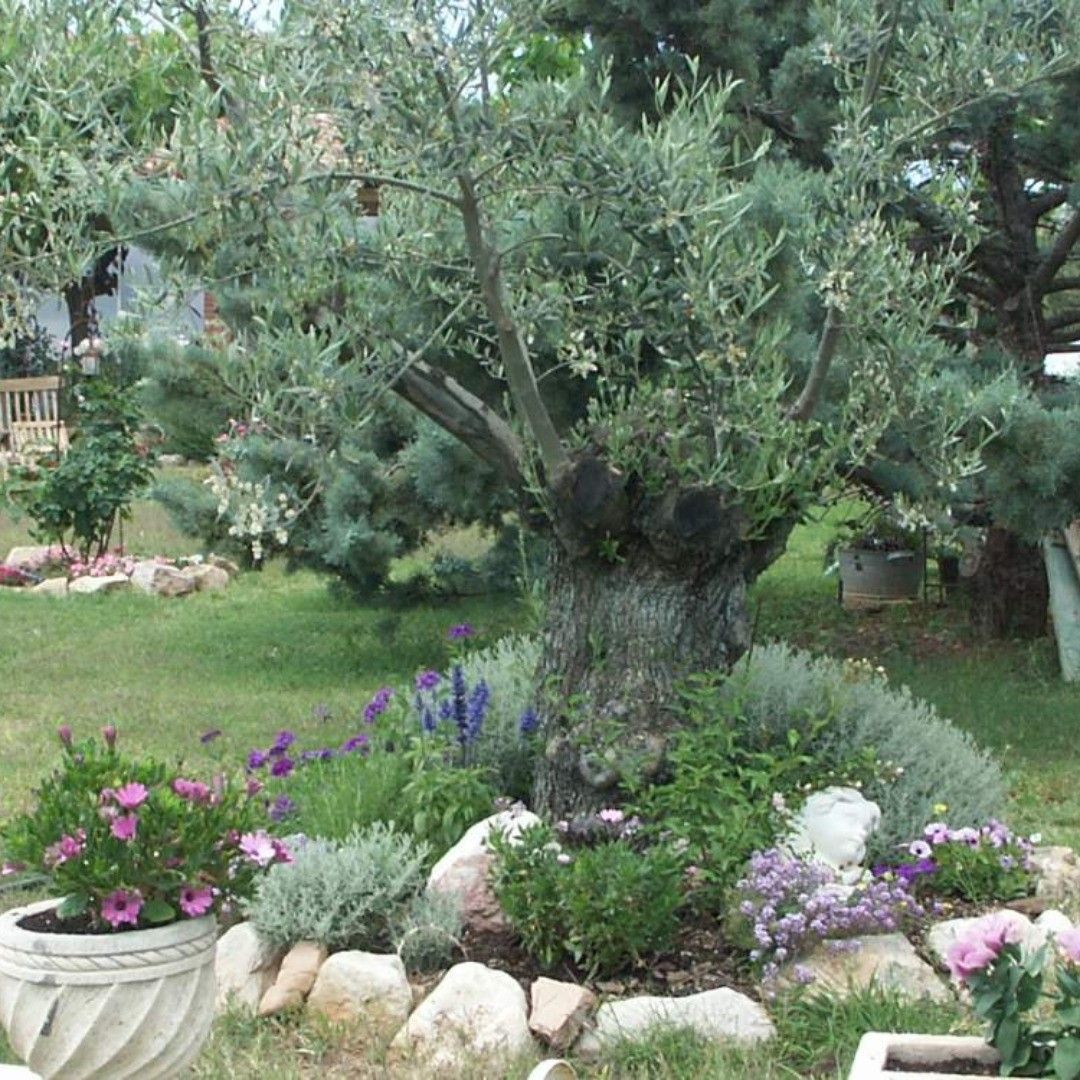 Spanien Katalonien Schone Finca Zu Verkaufen Kaufpreis 285 000 Euro Finca Falset Spanien Spain Auswandern Katalonien Outdoor Outdoor Decor Plants