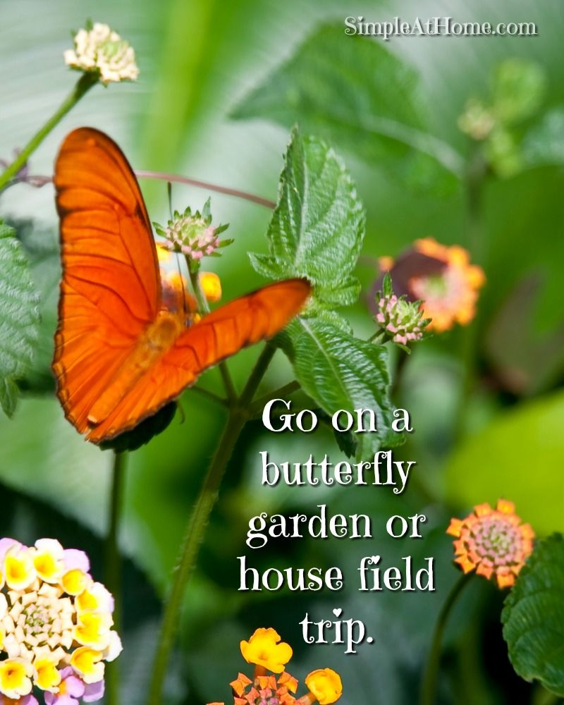 Go on a field trip to a butterfly house.