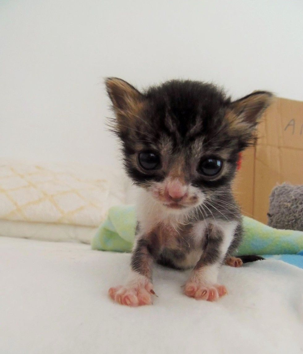 Tiniest Orphaned Kitten Found In Field Cries Out For Help Then And Now Baby Animals Kitten Cats And Kittens