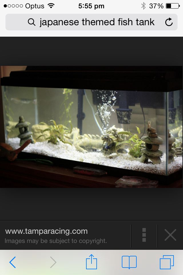Fish tank inspiration on Pinterest Fish Tanks, Betta and Fish ...