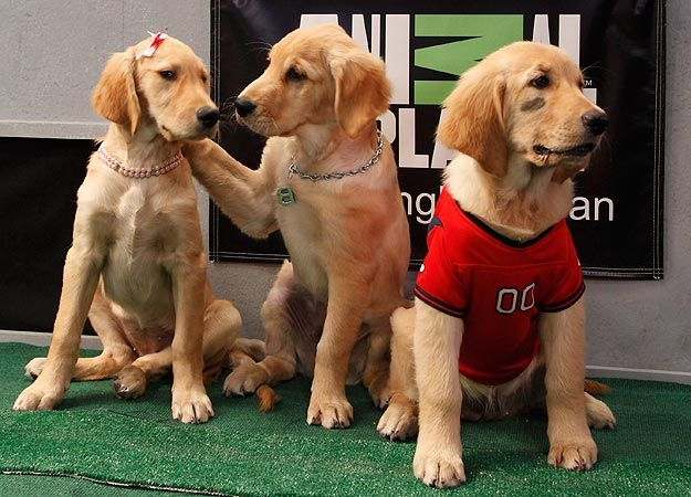 Puppy Bowl Viii Photo Gallery Puppies Crazy Dog Lady I Love Dogs
