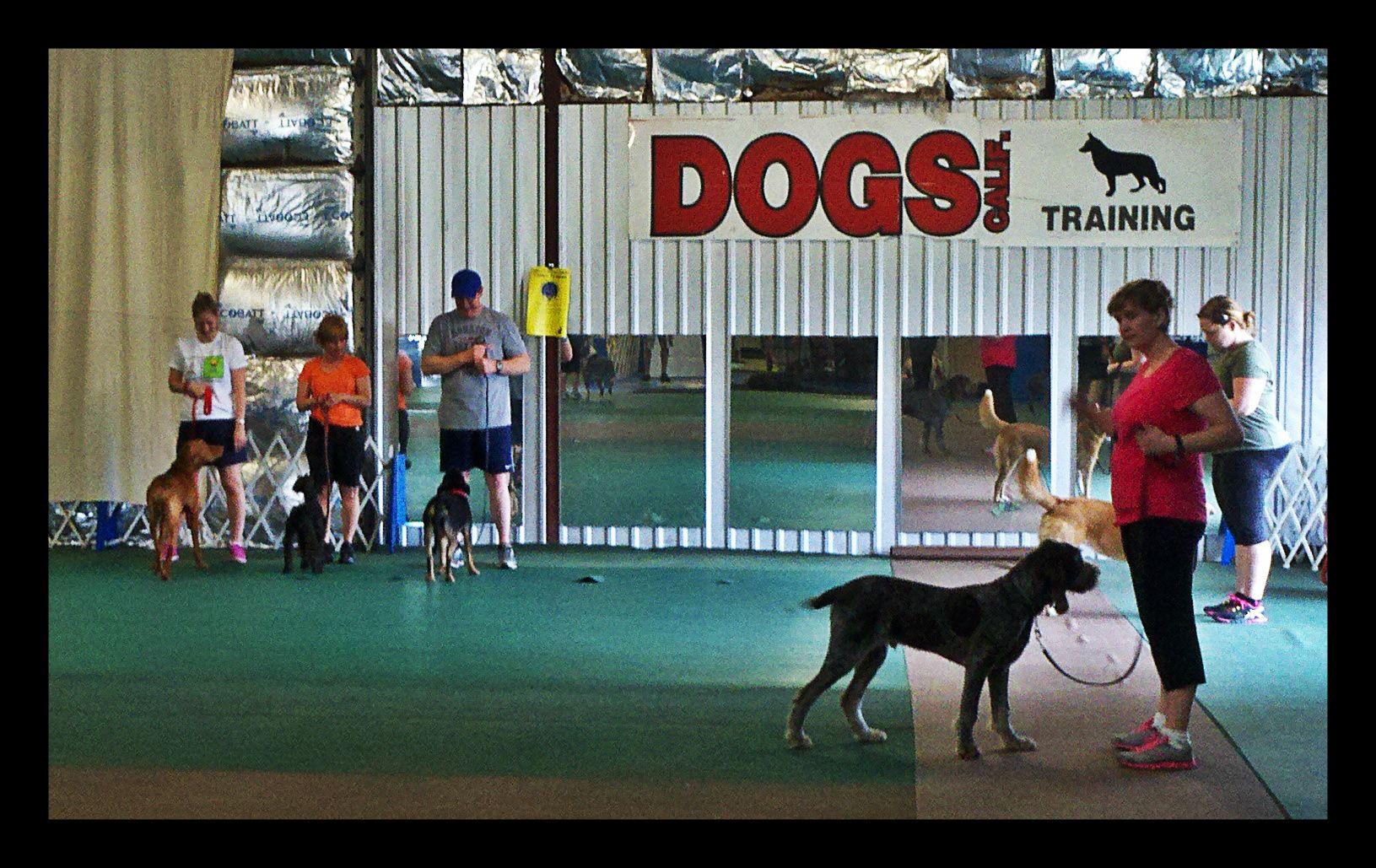 Dog Training Group Classes At Club Canine Houston Dog Training