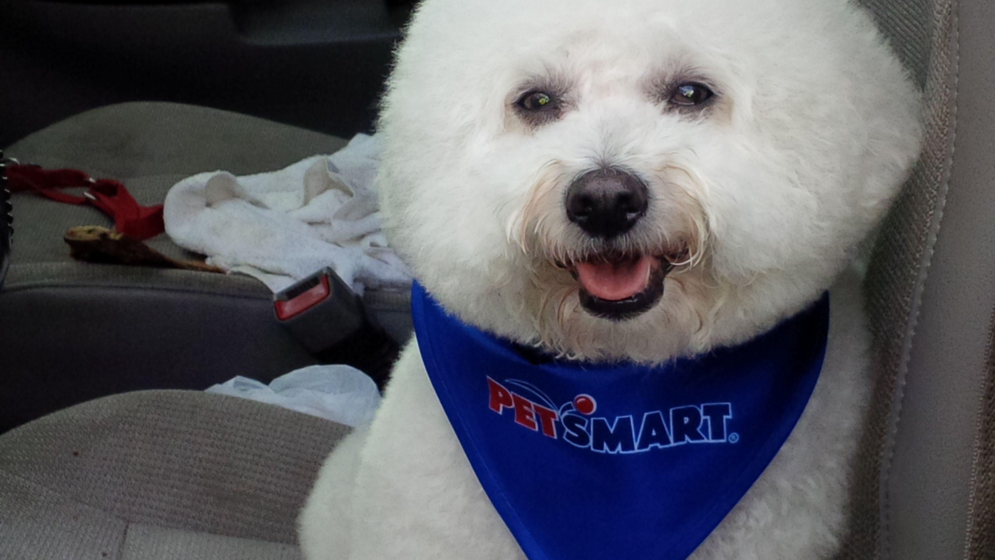 Petsmart at Howell Mill Bichon, Petsmart, Dogs