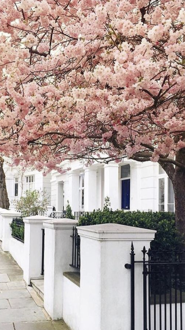 Pin By Mschocolate On New York Notting Hill London Blossom Trees Cherry Blossom Tree