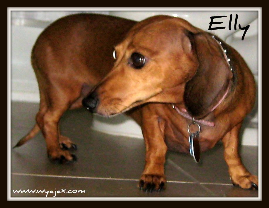Elly She is sweet as pie and loves her brother Buddy