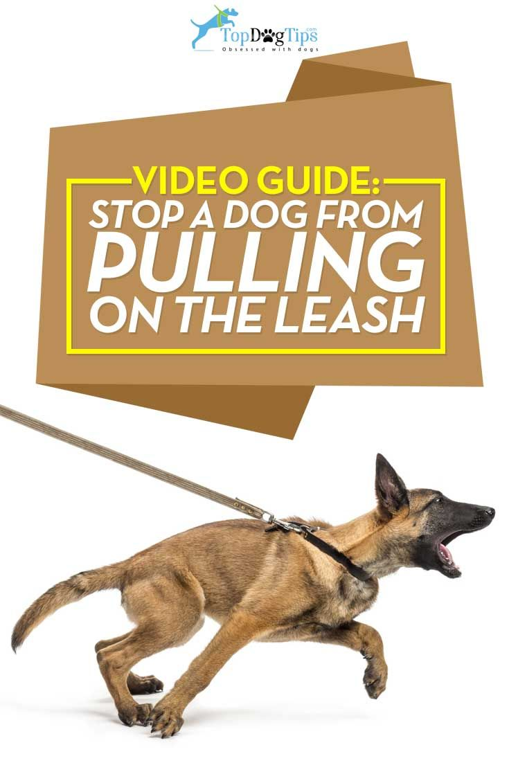 How To Stop A Dog From Pulling On Leash 101 Step By Step Video