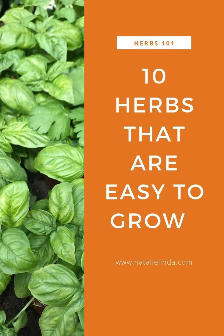 10 Herbs That Are Super Easy To Grow is part of Herbs, Herb garden pallet, Gardening tips, Culinary herbs, Gardening for beginners, Planting herbs - If you want to start your own herb garden, try starting with these 10 culinary herbs that are supereasy to grow and perfect for gardening beginners!