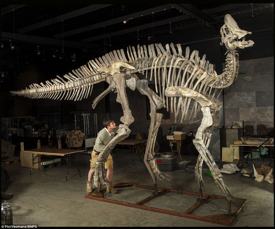 25-foot long duck-billed dinosaur sells for $170,000 at