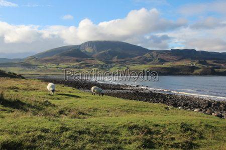 Am Strand der Insel trifft man manchmal auch auf Schafe
