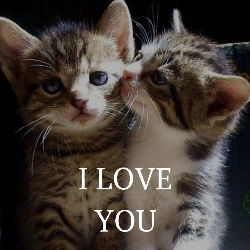 I Love You Share Quote #lovequotes #love #cutelovequotes # ...