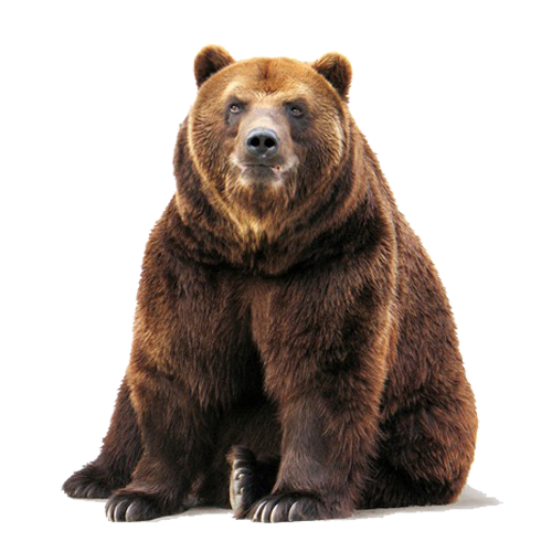Bear Png Image Purepng Free Transparent Cc0 Png Image Library Grizzly Bear Brown Bear Brown Bear Facts