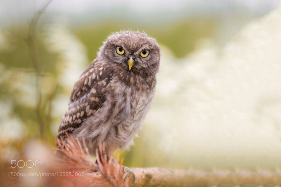 look in my eyes and say you love me by Tux2107. @go4fotos
