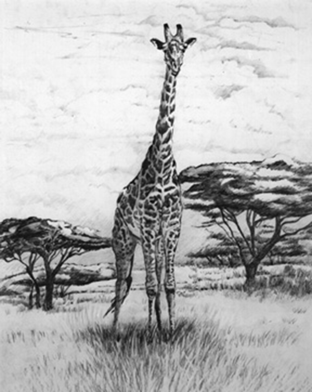 Giraffe lithograph by Synnove available on Etsy shop Gift of the Sun