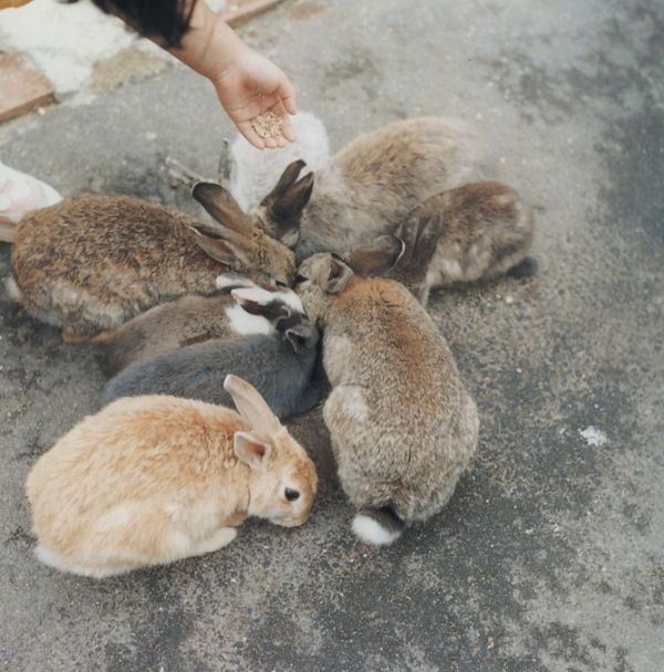 Rinko Kawauchi - hungry bunnies    i saw 2 bunnies near the beach yesterday and it made me feel so happy