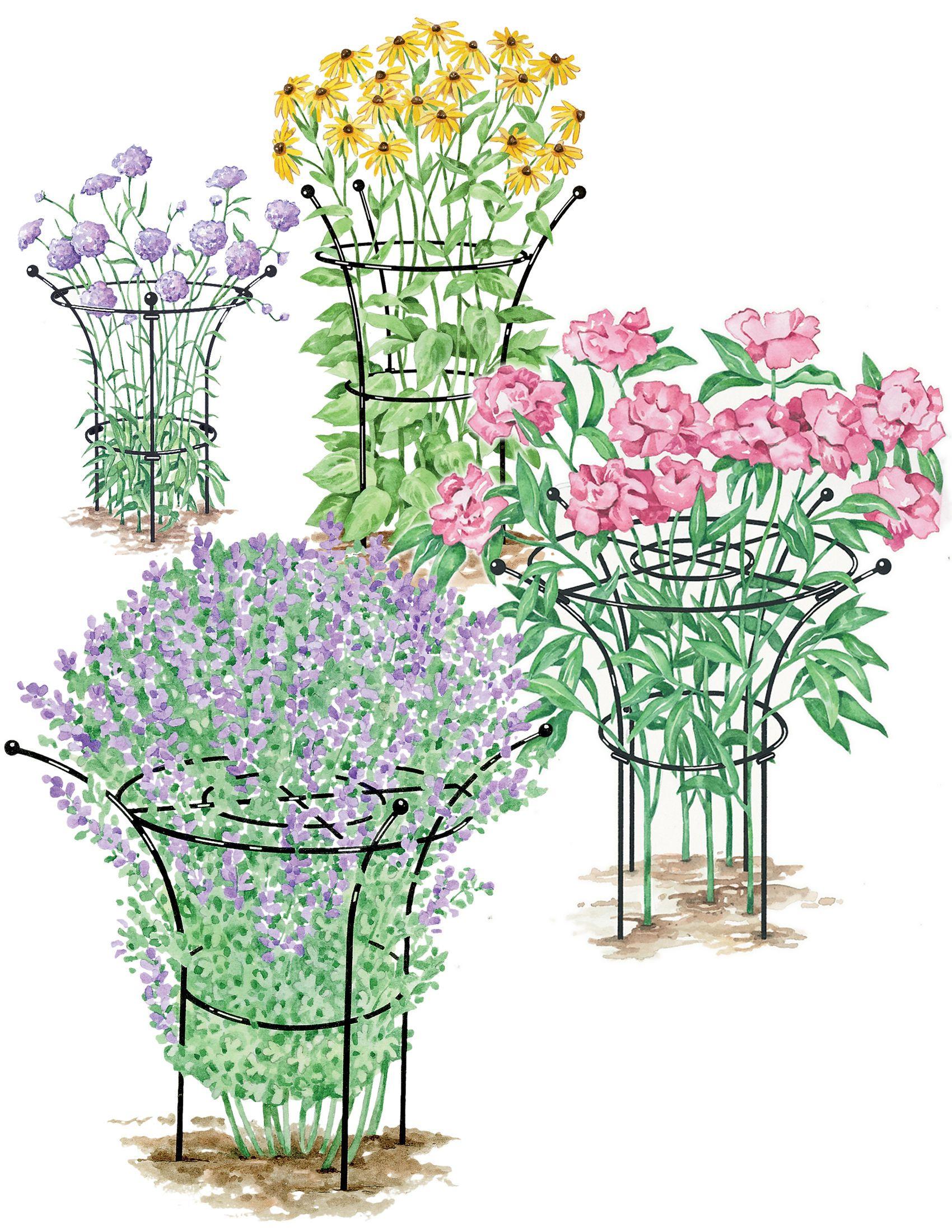 Essex Plant Support Peony Ring Gardener S Supply Med Bilder