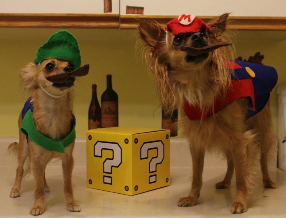 Mario and Luigi dog costumes   Ridiculous dog costumes ...