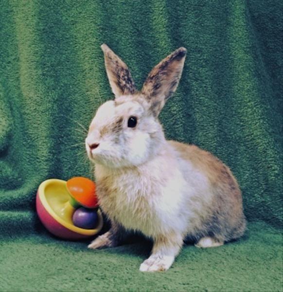 Craigslist San Diego Pets For Sale